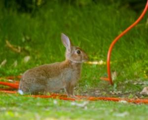 rabbit-onsite